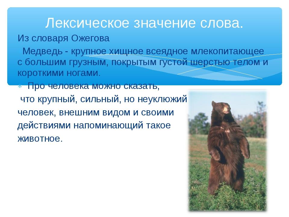 Из словаря Ожегова Медведь - крупное хищное всеядное млекопитающее с большим...
