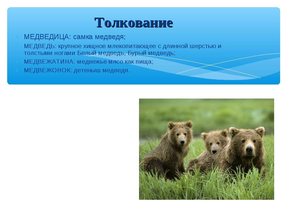 МЕДВЕДИЦА: самка медведя; МЕДВЕДЬ: крупное хищное млекопитающее с длинной шер...