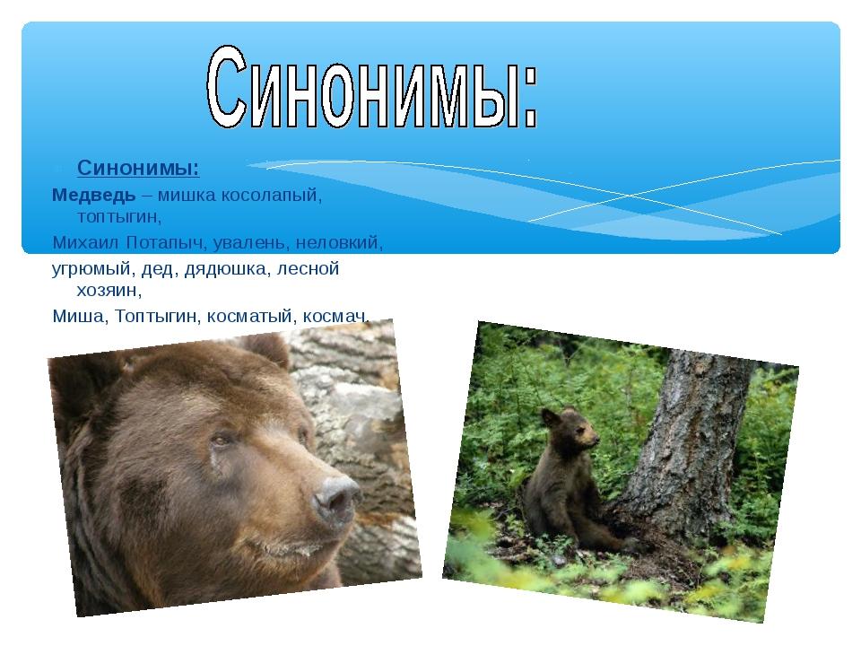Синонимы: Медведь – мишка косолапый, топтыгин, Михаил Потапыч, увалень, нелов...
