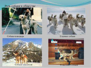 Роль собаки в обществе Собака-поводырь Ездовые собаки Собаки-спасатели Розыск