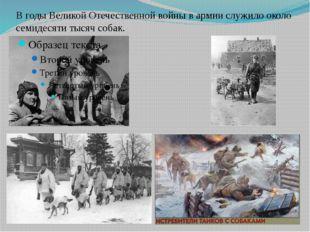 В годы Великой Отечественной войны в армии служило около семидесяти тысяч соб