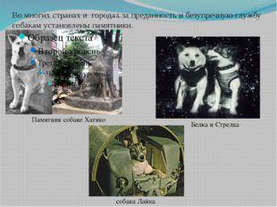 Во многих странах и городах за преданность и безупречную службу собакам устан