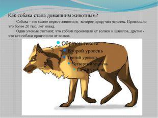 Как собака стала домашним животным? Собака - это самое первое животное, кото