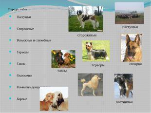 Породы собак Пастушьи Сторожевые Розыскные и служебные Терьеры Таксы О