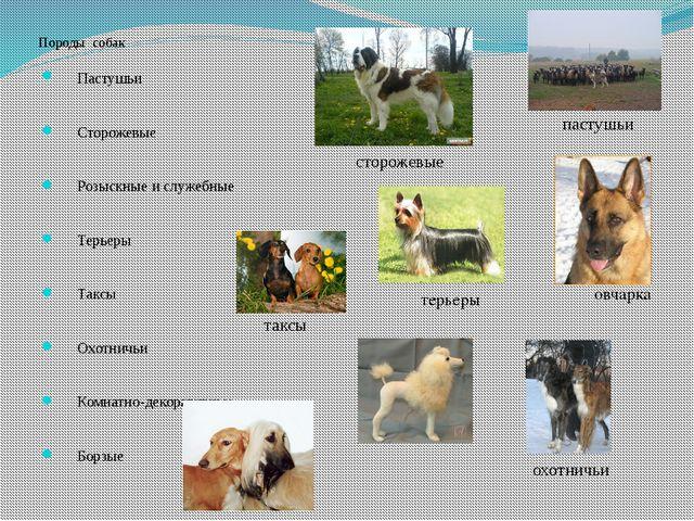 Породы собак Пастушьи Сторожевые Розыскные и служебные Терьеры Таксы О...