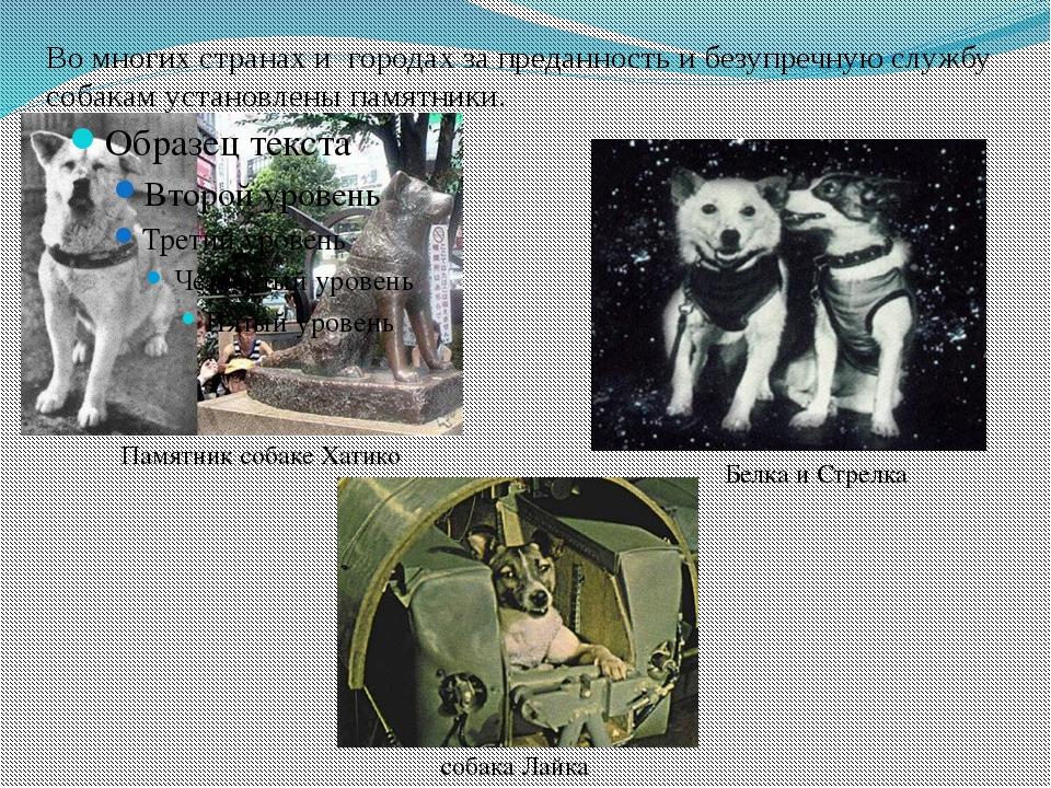 Во многих странах и городах за преданность и безупречную службу собакам устан...