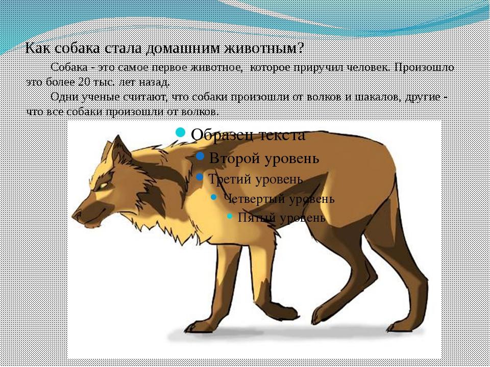 Как собака стала домашним животным? Собака - это самое первое животное, кото...