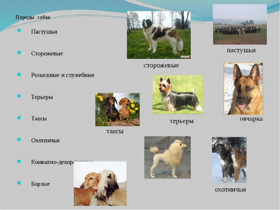 имена собак с картинками особых ценителей подготовили