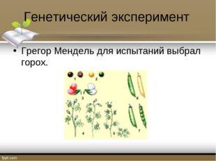 Генетический эксперимент Грегор Мендель для испытаний выбрал горох.