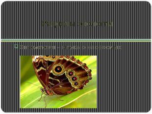 Разделы зоологии Энтомология – наука о насекомых