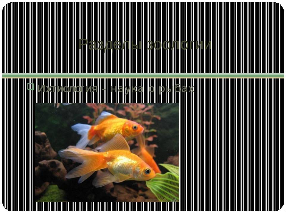 Разделы зоологии Ихтиология – наука о рыбах