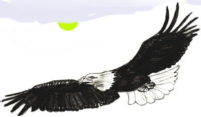Как нарисовать орла, шаг 6