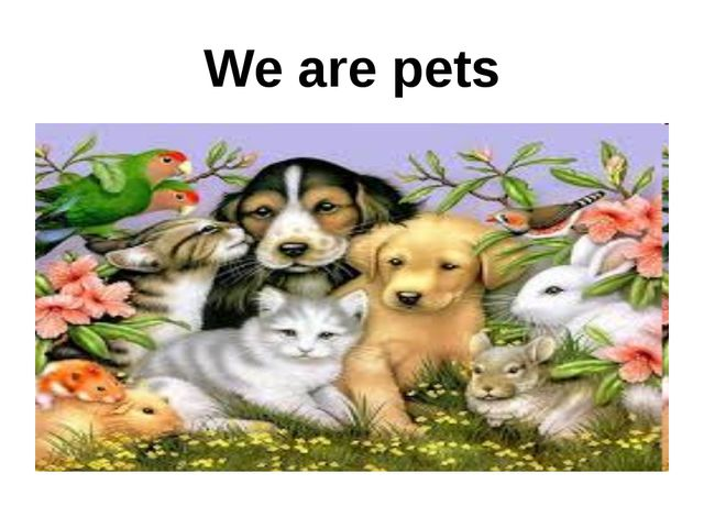 We are pets
