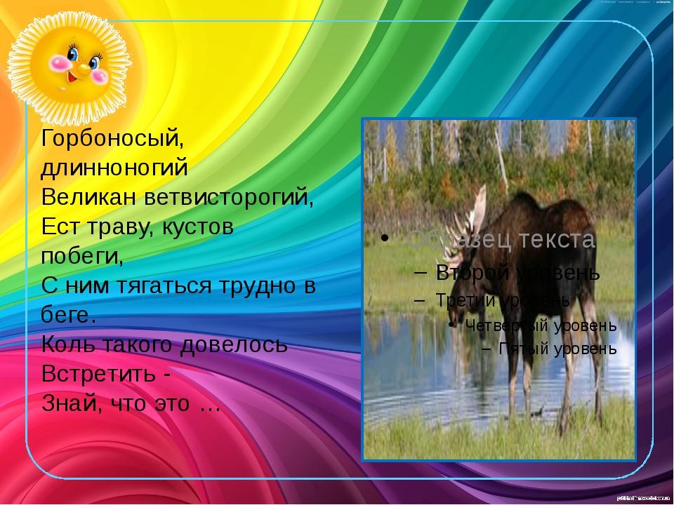 Горбоносый, длинноногий Великан ветвисторогий, Ест траву, кустов побеги,...