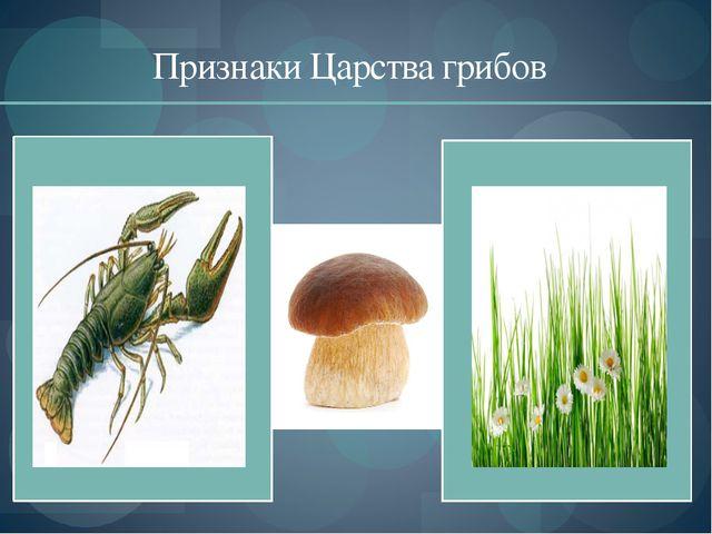 Признаки Царства грибов
