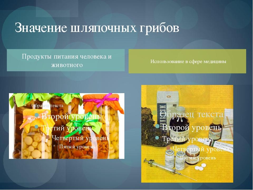 Продукты питания человека и животного Значение шляпочных грибов Использование...