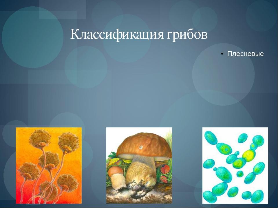 Классификация грибов