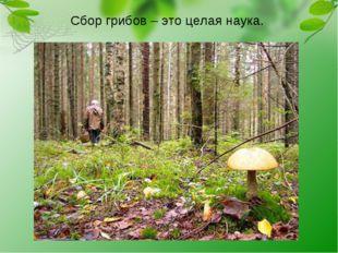 Сбор грибов – это целая наука.