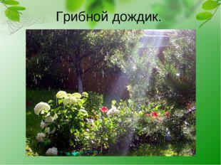 Грибной дождик.