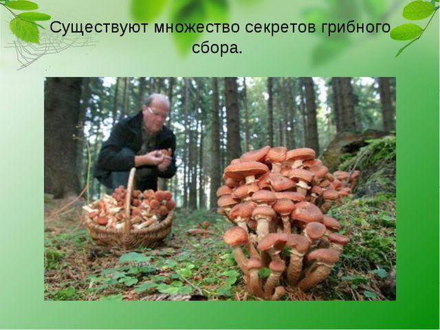 Существуют множество секретов грибного сбора.