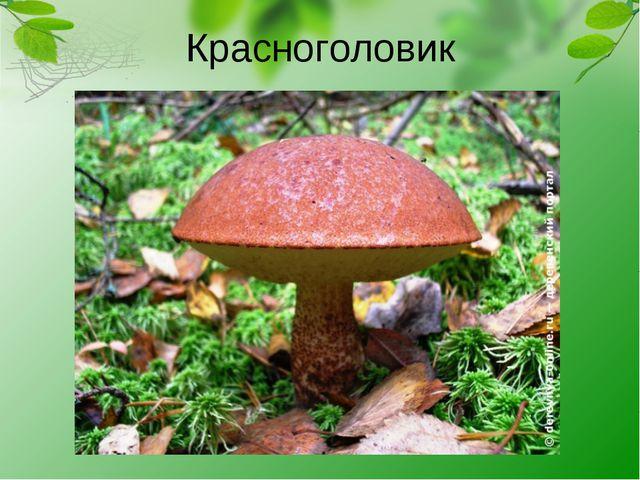 Красноголовик