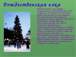 Рождественская елка Предполагают, что первые неукрашенные Рождественские елки