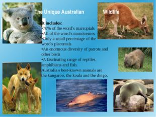 The Unique Australian 	 	Wildlife It includes: •70% of the word's marsupials