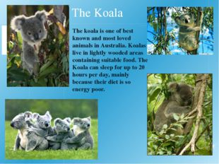 The Koala The koala is one of best known and most loved animals in Australia