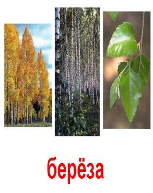 http://900igr.net/datas/rastenija-i-griby/Derevja-1.files/0006-006-Berjoza.jpg