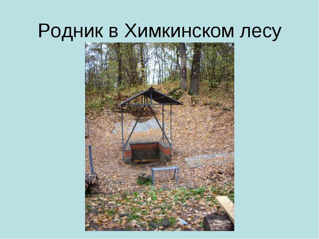 Родник в Химкинском лесу