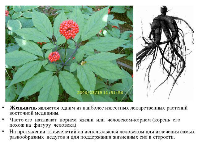 Женьшень является одним из наиболее известных лекарственных растений восточно...