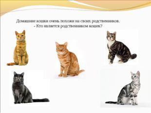 Домашние кошки очень похожи на своих родственников. - Кто является родственни