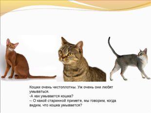 Кошки очень чистоплотны. Уж очень они любят умываться. А как умывается кошка?