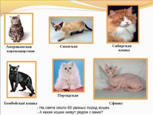 Американская короткошерстная Бомбейская кошка Персидская Сибирская кошка Сфин