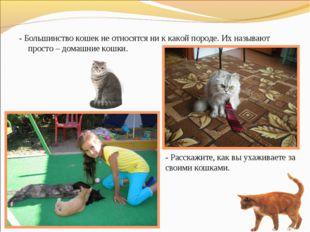 - Большинство кошек не относятся ни к какой породе. Их называют просто – дома