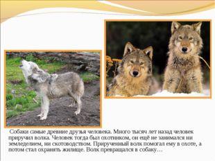Собаки самые древние друзья человека. Много тысяч лет назад человек приручил