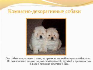 Комнатно-декоративные собаки Эти собаки живут рядом с нами, не приносят никак