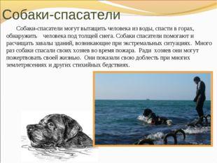 Собаки-спасатели могут вытащить человека из воды, спасти в горах, обнаружить