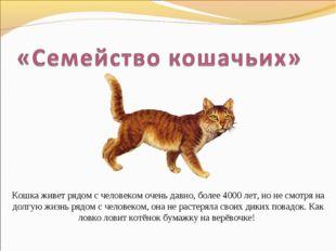 Кошка живет рядом с человеком очень давно, более 4000 лет, но не смотря на до