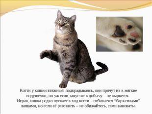 Когти у кошки втяжные: подкрадываясь, они прячут их в мягкие подушечки, но у