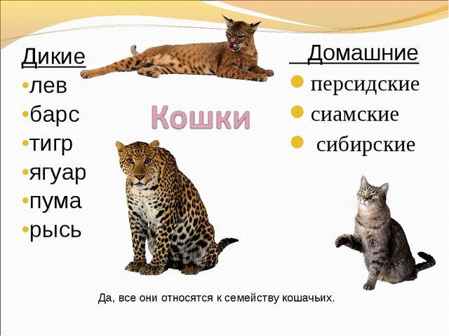 Дикие лев барс тигр ягуар пума рысь Домашние персидские сиамские сибирские Да...