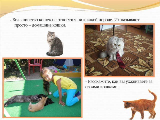 - Большинство кошек не относятся ни к какой породе. Их называют просто – дома...