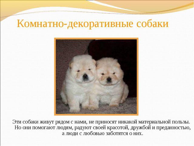 Комнатно-декоративные собаки Эти собаки живут рядом с нами, не приносят никак...