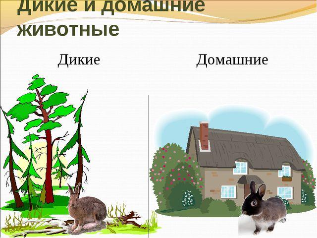 Дикие и домашние животные Дикие Домашние