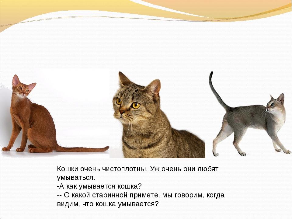 Кошки очень чистоплотны. Уж очень они любят умываться. А как умывается кошка?...
