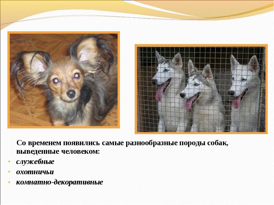 Со временем появились самые разнообразные породы собак, выведенные человеком...