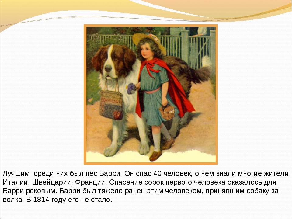 Лучшим среди них был пёс Барри. Он спас 40 человек, о нем знали многие жители...