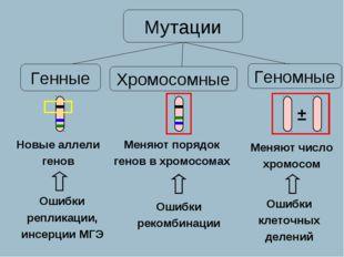 Новые аллели генов Меняют порядок генов в хромосомах Меняют число хромосом Ге