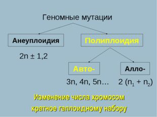 Геномные мутации Анеуплоидия Полиплоидия 2n ± 1,2 Авто- Алло- 3n, 4n, 5n… 2 (