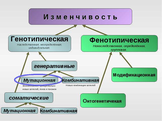 Новые комбинации аллелей И з м е н ч и в о с т ь Возникновение принципиально...